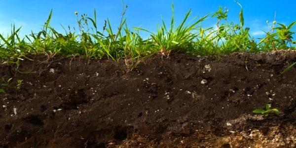 terreno-fertile-guida-alla-coltivazione