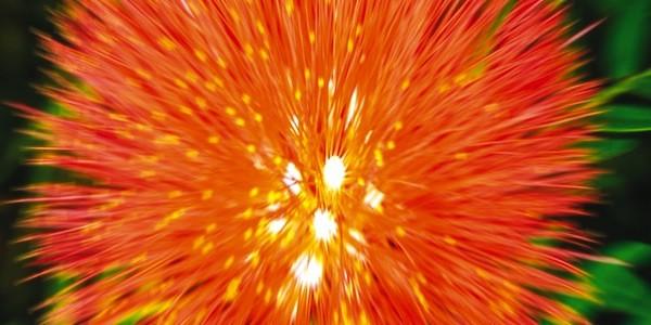 PK 13:14 CANNA fertilizzante Stimolatore Fioritura
