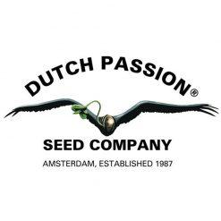 Dutch Passion Autofiorenti