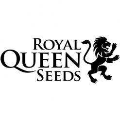 Royal Queen Seeds Autofiorenti